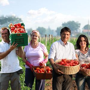 associaz_agricoltori_pomodoro