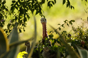 Monticello_Allevamento agricultural #039; open all &